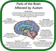 Here are just a few that are often used to treat autistic children: Applied Behavior Analysis (ABA), Speech Therapy, Occupational Therapy, Vitamin Therapies, Special Diets, and Sensory Integration Therapy