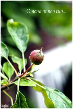 Bag End: Omena onnen tuo Bago, Apple, Fruit, Gardens, Food, Flowers, Meal, The Fruit, Essen