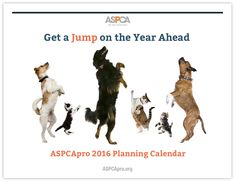 To help you optimize the possibilities every month of 2016 can bring, ASPCA Professional put together this free shelter-focused calendar available for download in .PDF format.  Included here are special (serious and not-so-serious) days that you can use for social media engagement and more. Conferences, planning ahead, and shelter life cycle information are also gathered month by month.