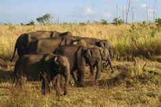 Elephants in Uda Walawe National Park, Sri Lanka (www.secretlanka.com)