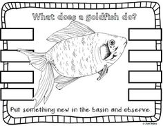 Living the Teaching Life: Goldfish & Guppies- Interactive