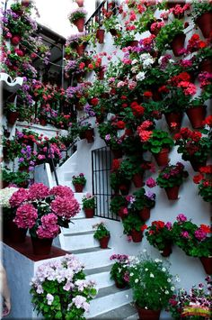 for the love of geraniums in the patios de cordobas - taringa! Amazing Gardens, Beautiful Gardens, Vegetable Garden Fertilizer, Garden Spaces, Dream Garden, Flower Decorations, Garden Inspiration, Container Gardening, Flower Pots