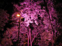 04-SEP-05 | Flickr: Intercambio de fotos