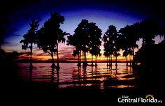 Dark #CentralFL sunset with Cypress Trees - Polk County, Florida