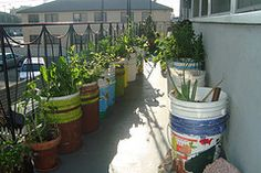 How to Determine the Amount of Sunlight Your Garden Gets