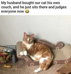 Quirky Cat products came across Majestic Pet Products. A site to order new custom cat bed and other custom products we think you'll love. Funny Animal Jokes, Cute Funny Animals, Stupid Funny Memes, Funny Animal Pictures, Funny Relatable Memes, Haha Funny, Funny Cute, Cute Cats, Funny Stuff