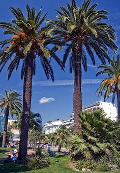 Boulevard de La Croisette, Cannes, Cote de Azur,France