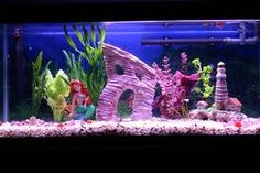 fish tank ideas for freshwater - Google Search