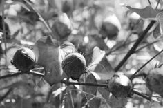 Alabama Chanin: Organic Cotton