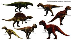 Really Large Carnivorous Dinosaurs - Carnivore Dinosaurs Wallpaper ...