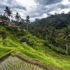Beeindruckt von der Schönheit Balis: 14 Tage in Kuta mit Flug & Strandhotel ab 531 € - Urlaubsheld | Dein Urlaubsportal