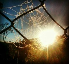Apanhador de sonhos feito pelo dona aranha