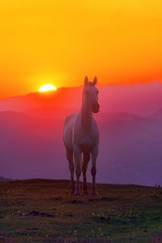 Horse at Sunset on mountain by Mimadeo on Flickr.
