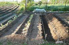 Применяем теплые грядки и получаем ведро картошки с куста | Vusadebke.com | Яндекс Дзен Agriculture, Railroad Tracks, Vineyard, Outdoor, Gardening, Garten, Outdoors, Vine Yard, Vineyard Vines