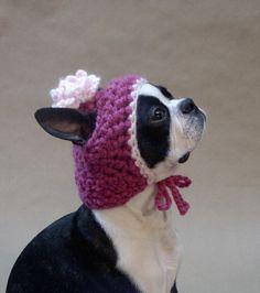 Hand knitted hat for dogs --- She looks like my Bug Princess! Knitting Patterns For Dogs, Knitting Projects, Loom Hats, Boston Terrier Dog, Mini Dachshund, Cute Animal Photos, Dog Sweaters, Dog Coats, Diy Stuffed Animals