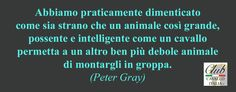 Di Peter Gray