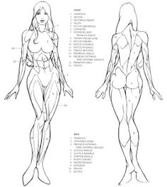 Female Anatomy Study of drawing lesson and tutorials with video lower body