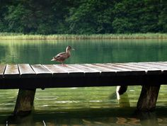 New free stock photo of wood jetty bird   Download it on Pexels