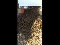 Ground Bee Swarm Walks Into Empty Hive 2 - YouTube