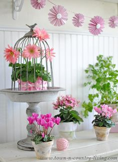 Potted Pink Spring Flowers and a Wire Bird Cloche