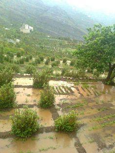 May Yemen get steady & adequate rain to nourish the fields for future harvests.