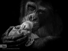 Mother by dirksiemer. Please Like http://fb.me/go4photos and Follow @go4fotos Thank You. :-)
