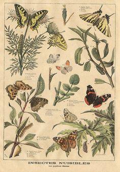 butterflies    le petit journal 27 juin 1897