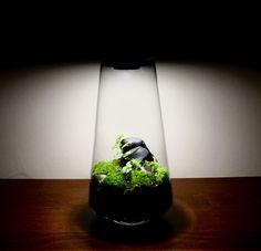 Lamp Terrarium Terrarium Plants, Jar, Green, Bottles, Home Decor, Decoration Home, Room Decor, Home Interior Design, Jars