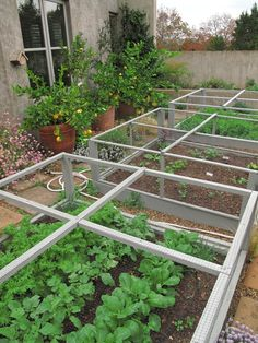 Gorgeous potager. great way to keep chix from scratching up seedlings