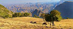 Les montagnes du Simen ou le parc national du Simien situé au nord du Plateau éthiopien offrent de nombreux sommets, dont le plus haut, le pic Ras Dachan, culmine à 4 620 mètres d'altitude. Il est le point culminant du pays - #easyvoyage #easyvoyageurs #clubeasyvoyage #terresdevoyages #travel #traveler #traveling #travellovers #voyage #voyageur #holiday #tourism #tourisme #evasion #afrique #africa #ethiopie #simen #rasdachan #nature