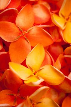 Orange Jungle Flame Flower ~ By Johan Larson