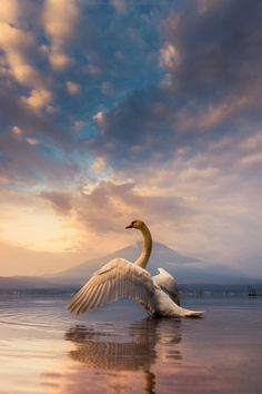 swan and Mt Fuji, Japan by Coolbiere. A.