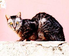 Striking Alley Cat Tel Aviv Florentine Area