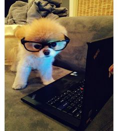 Boo, the Cutest and the Most Popular Dog in the World, with 6.9 Million FB Fans ! Read his story ! http://www.feminiya.com/boo-the-cutest-dog-in-the-world-with-6-9-million-fb-fans/