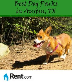 There are more than a dozen #Austin dog parks that cater to a vibrant pup community. Here are some of Rent.com's favorites.