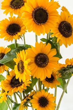 """My favorite flower. Reminds me of playing with my best friend as a girl.  """"Sunflowers and your face fascinate me. You love only the tallest trees. I come running down the hill, but you're fast. You're the winner. Long distance winner""""-Stevie Nicks."""