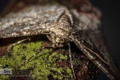 just hiding... by c_h_r_i_s_t_i_a_n. Please Like http://fb.me/go4photos and Follow @go4fotos Thank You. :-)