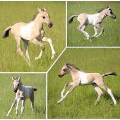 😍🐴😍meet 10 day old Makani😍🐴😍 . Mans Best Friend, Best Friends, Filly, Beautiful Horses, Equestrian, Super Cute, Cowgirls, Wolves, Gift Ideas
