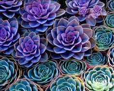 I have a new obsession with succulents! They should do really well in the Texas heat, so I will be planting these this summer!