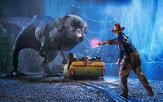 My gf photoshops pugs into different scenes - Imgur