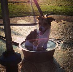Bath time at Joe Station Dog Park! - Tulsa, OK - Angus Off-Leash #dogs #puppies #cutedogs #dogparks #tulsa #oklahoma #angusoffleash