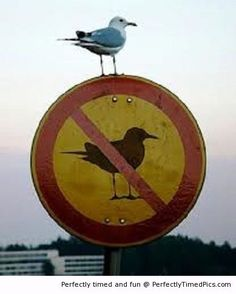 No bird does not mean no bird | Perfectly Timed Pics