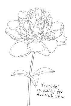 How to draw a peony step 5