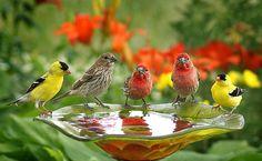 Garden Party by PopsDigital, via Flickr