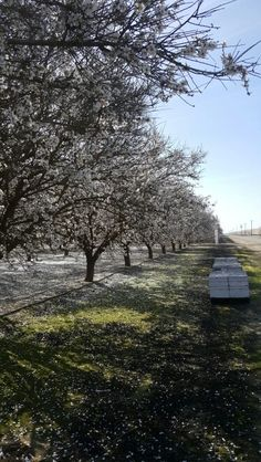 Up at almond pollination