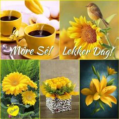 Morning Blessings, Good Morning Wishes, Morning Messages, Lekker Dag, Evening Greetings, Goeie Nag, Goeie More, Afrikaans Quotes, Planter Pots