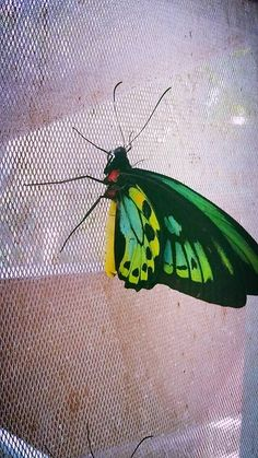 Newly hatched butterfly at Bali Butterfly Park