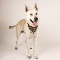 Archie is available for adoption at our Mission campus!