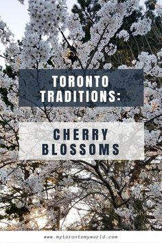 Toronto Traditions: Toronto Cherry Blossoms | MyTorontoMyWorld