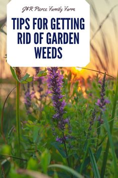 Are you tired of pulling, sweating, and straining to get rid of all the weeds in your garden? Stop stressing and eliminate them once and for all with these helpful hacks. Diy Herb Garden, Garden Weeds, Container Gardening, Gardening Tips, Flower Gardening, Vegetable Gardening, Garden Renovation Ideas, Raised Garden Beds, Raised Bed